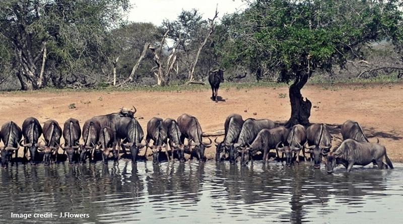 uMkhuze Game Reserve kuMasinga hide